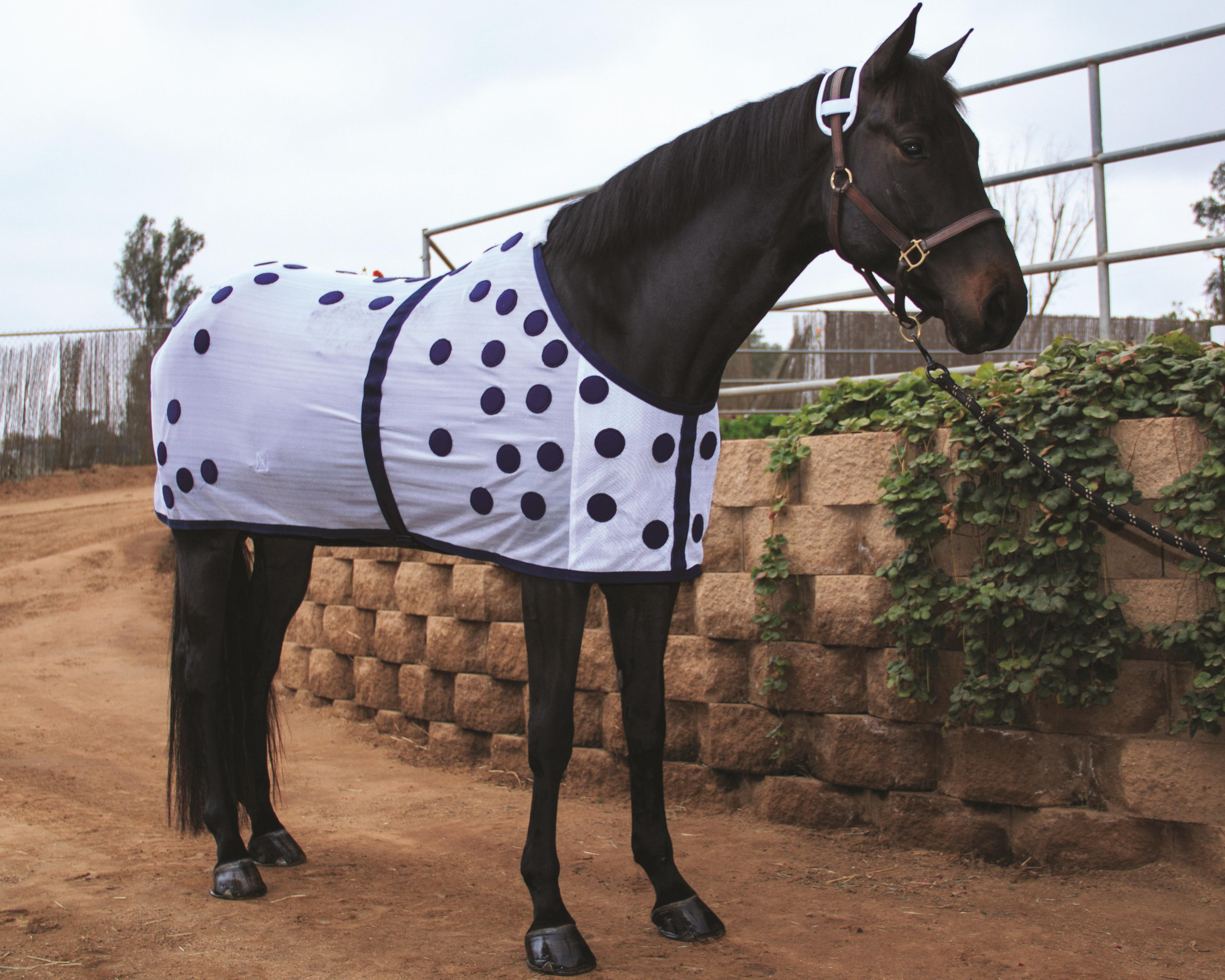 Магнитотерапия для здоровья лошади_ (выпуск журнала №39)