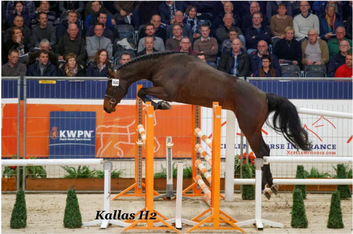 KWPN Stallion Show_ (выпуск журнала №40)
