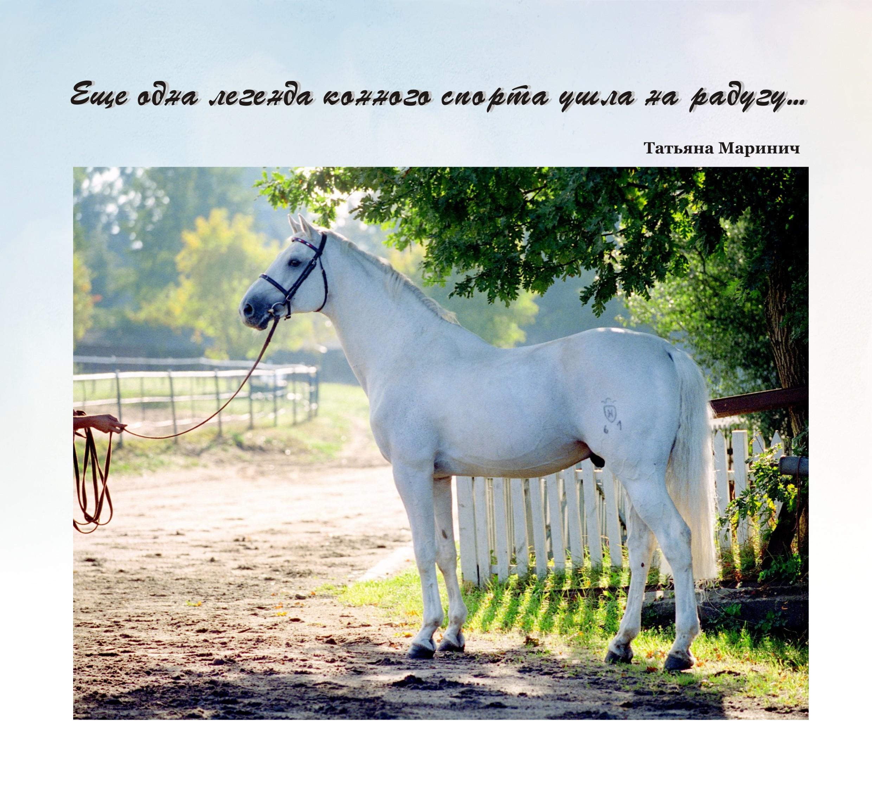 Еще одна легенда конного спорта ушла на радугу...(Corrado I)_(выпуск журнала №42)